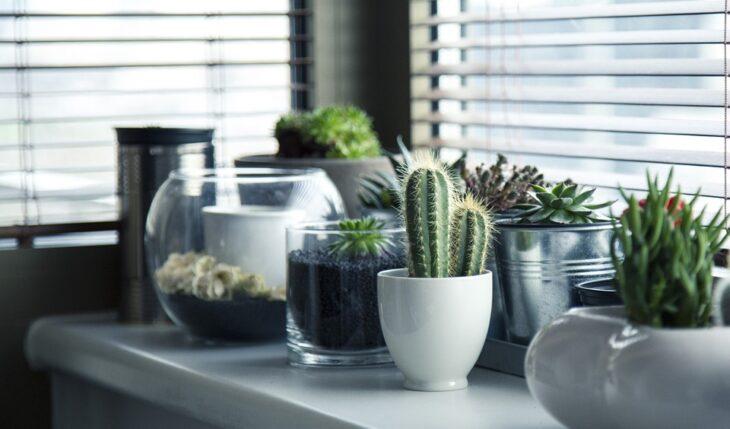 cuidado de un cactus
