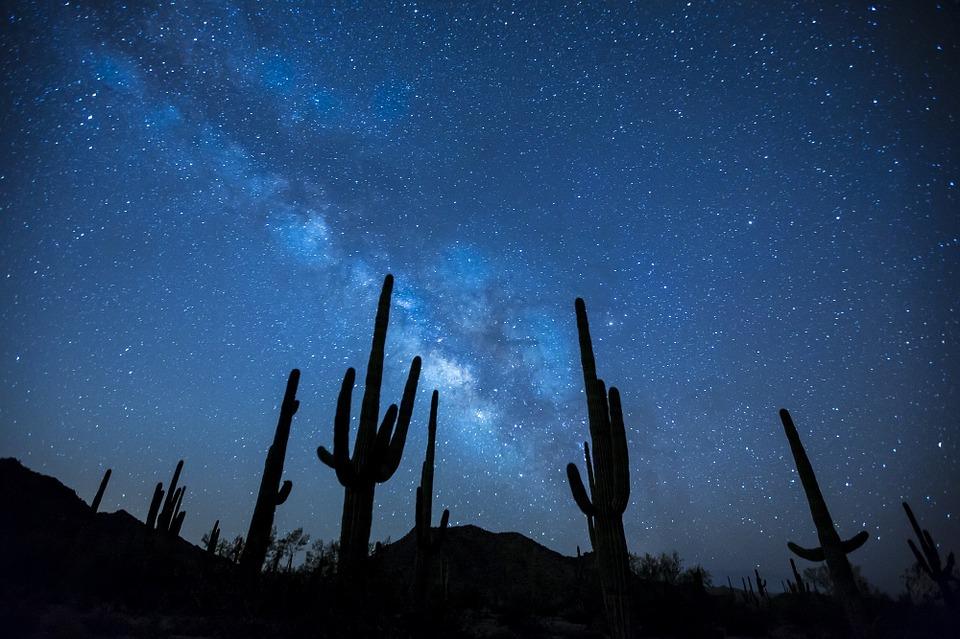 plantas deserticas cactus