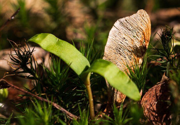 reforestacion-problematicas-factores-claves-del-exito