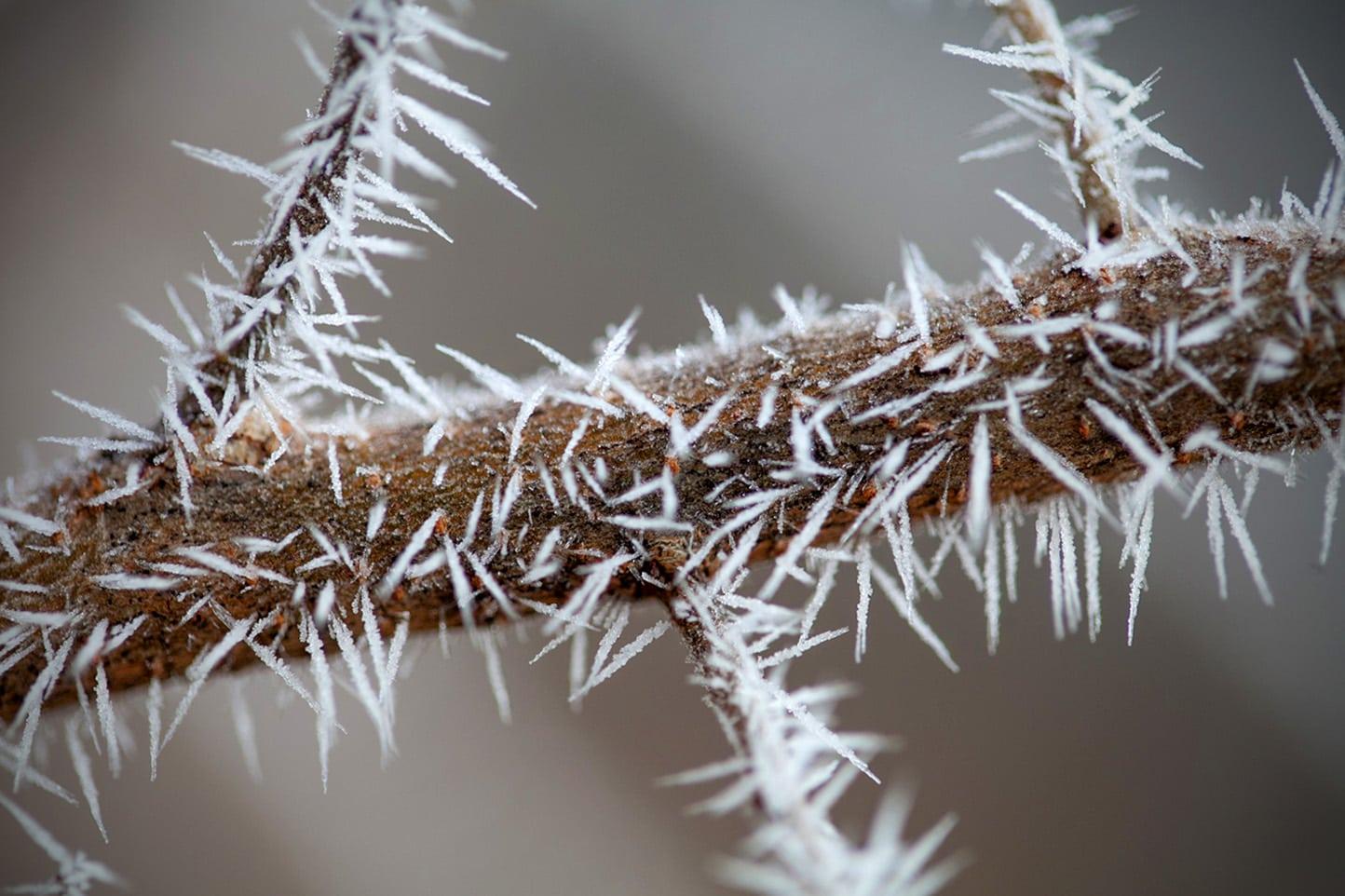 agujas de hielo
