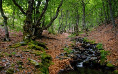 bosque silvestre