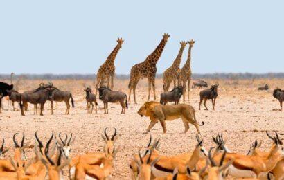 namibia conservación vida silvestre
