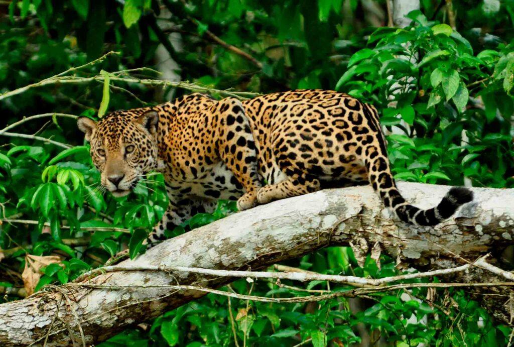 vida salvaje fauna