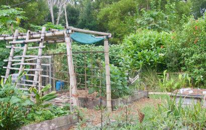 permacultura en Colombia